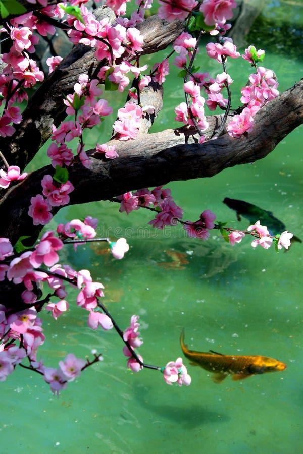 Δέντρο Sakura στη λίμνη με τα ψάρια στοκ φωτογραφία με δικαίωμα ελεύθερης χρήσης