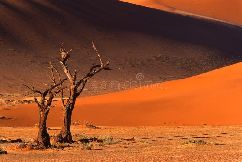 δέντρο sossusvlei της Ναμίμπια αμμόλοφων στοκ φωτογραφία με δικαίωμα ελεύθερης χρήσης