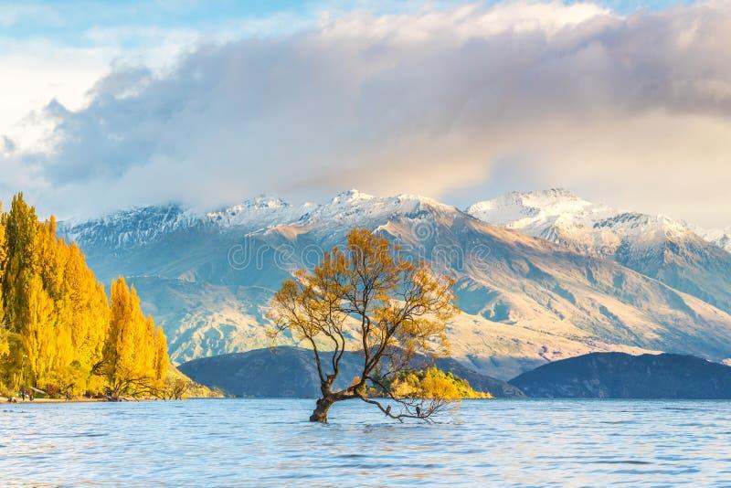 Δέντρο Wanaka στην ανατολή, Νέα Ζηλανδία στοκ φωτογραφία με δικαίωμα ελεύθερης χρήσης