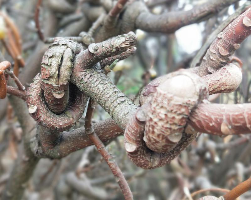 Δέντρο Wisted στοκ εικόνες