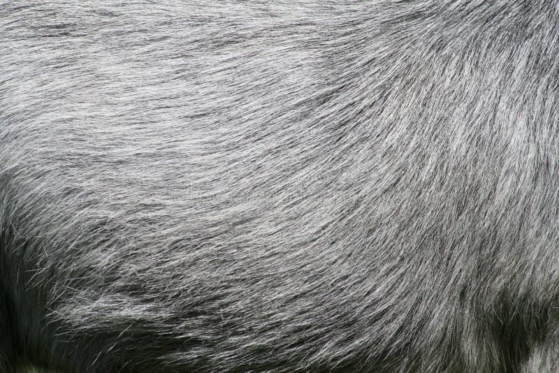δέρμα αλόγων στοκ εικόνα με δικαίωμα ελεύθερης χρήσης