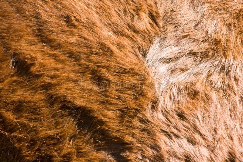 δέρμα αλόγων στοκ εικόνες με δικαίωμα ελεύθερης χρήσης