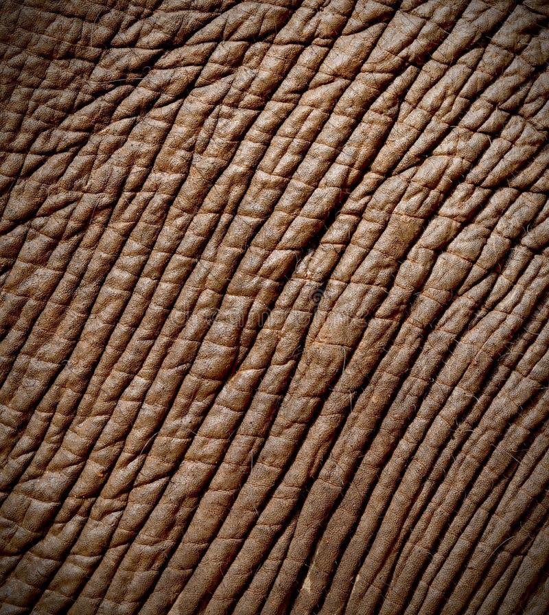 δέρμα ελεφάντων στοκ φωτογραφίες με δικαίωμα ελεύθερης χρήσης