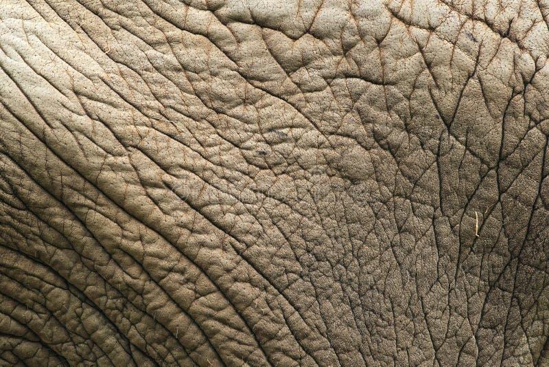 Δέρμα ελεφάντων στοκ εικόνα με δικαίωμα ελεύθερης χρήσης