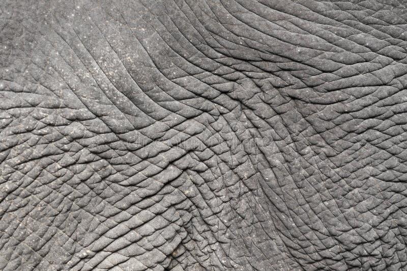 Δέρμα ελεφάντων στοκ εικόνες με δικαίωμα ελεύθερης χρήσης