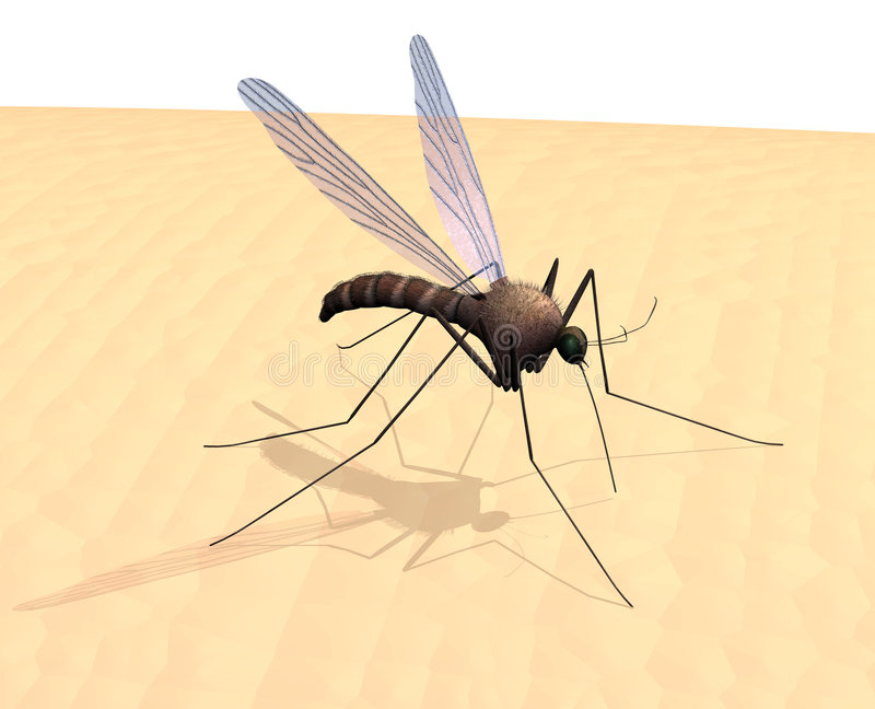 δέρμα κουνουπιών απεικόνιση αποθεμάτων