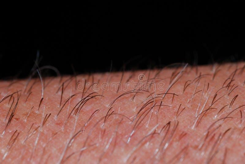 Δέρμα με την τρίχα στη μακροεντολή στοκ φωτογραφίες