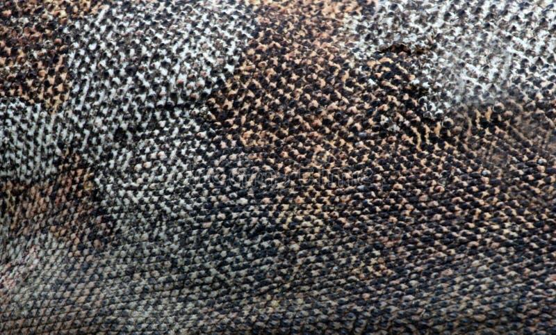 Δέρμα δράκων Komodo στοκ φωτογραφίες με δικαίωμα ελεύθερης χρήσης
