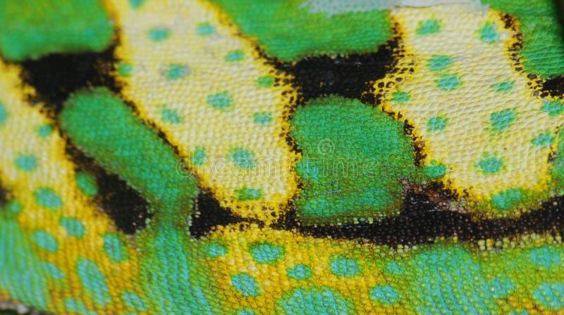 δέρμα χαμαιλεόντων στοκ φωτογραφία με δικαίωμα ελεύθερης χρήσης