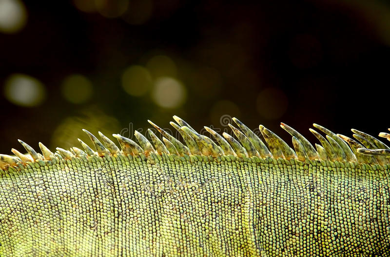 δέρμα iguana στοκ φωτογραφίες