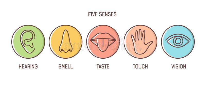 Δέσμη 5 αισθήσεων - ακρόαση, μυρωδιά, γούστο, αφή, όραμα Σύνολο ανθρώπινων αισθητήριων οργάνων που σύρονται με τις περιλήψεις μέσ διανυσματική απεικόνιση