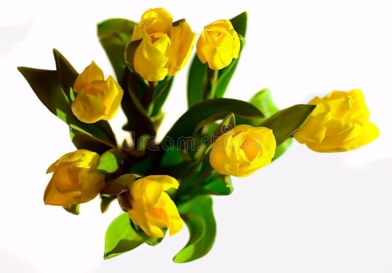 δέσμη επτά τουλίπες κίτριν&ep στοκ εικόνες με δικαίωμα ελεύθερης χρήσης