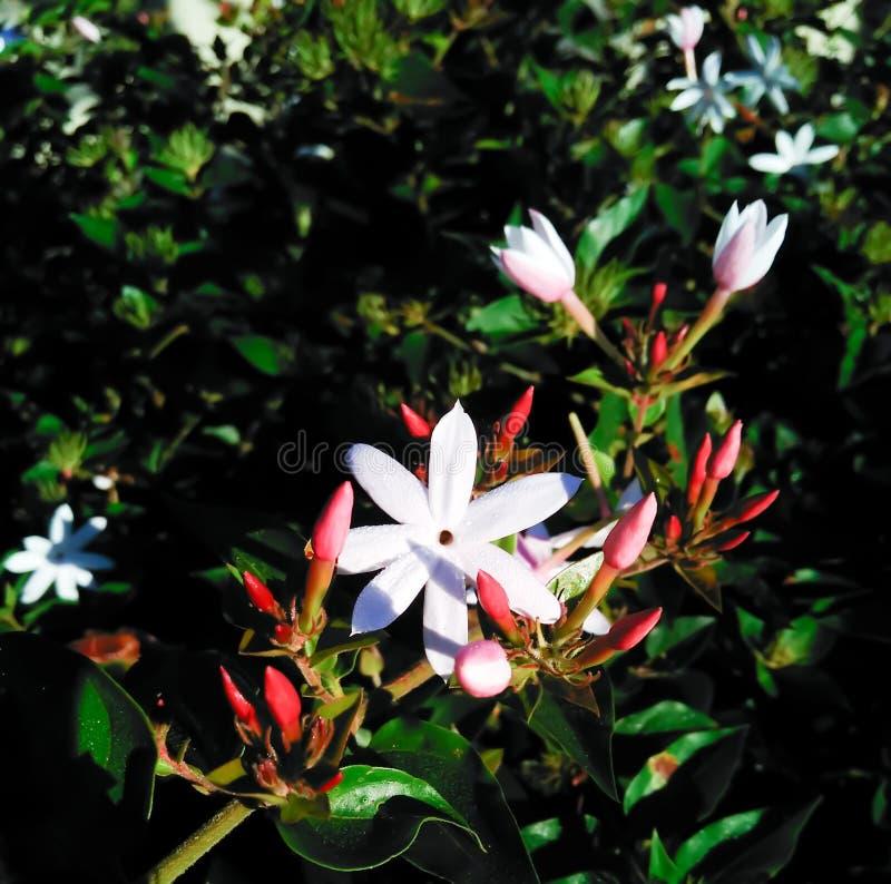 Δέσμη λουλουδιών στον κήπο στοκ φωτογραφίες