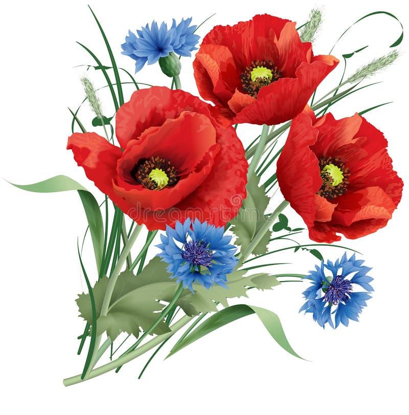 Δέσμη του κόκκινου λουλουδιού παπαρουνών, μπλε δημητριακά και γαρίφαλο λαγός-ποδιών διανυσματική απεικόνιση