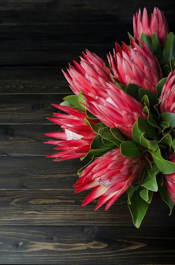 Δέσμη του κόκκινου protea αγκιναρών στοκ εικόνες με δικαίωμα ελεύθερης χρήσης