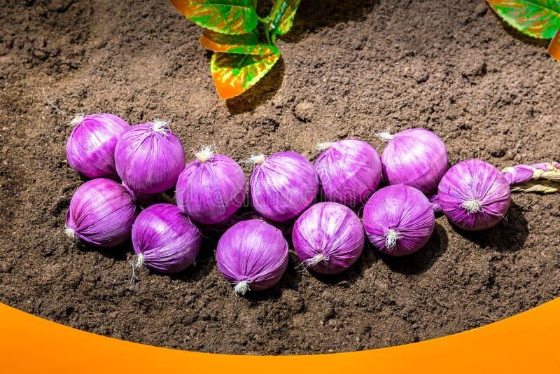 Δέσμη του σκόρδου που βρίσκεται στο έδαφος στοκ φωτογραφία με δικαίωμα ελεύθερης χρήσης