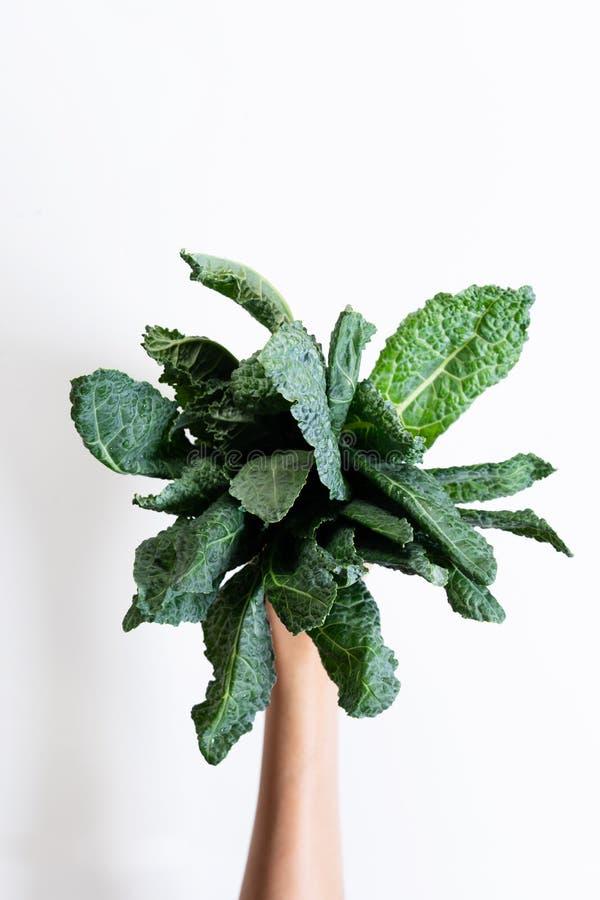 Δέσμη του φρέσκου κατσαρού λάχανου lacinato στοκ εικόνα