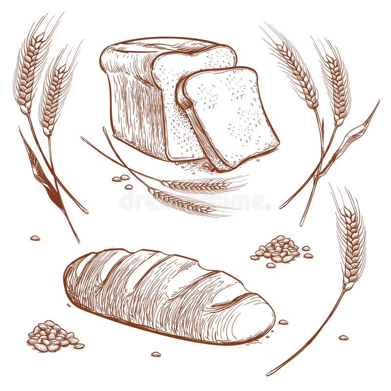 Δέσμη των αυτιών σίτου και της συρμένης χέρι διανυσματικής απεικόνισης ψωμιού στο εκλεκτής ποιότητας ύφος χάραξης, εικονίδια σκίτ ελεύθερη απεικόνιση δικαιώματος