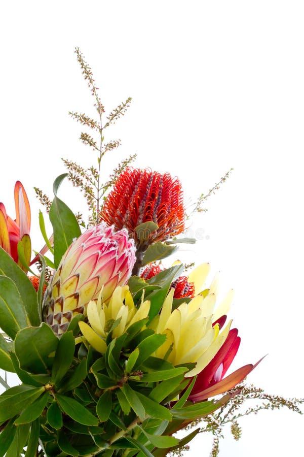 Δέσμη των εγγενών αυστραλιανών λουλουδιών - με το protea και το banksia στοκ φωτογραφία