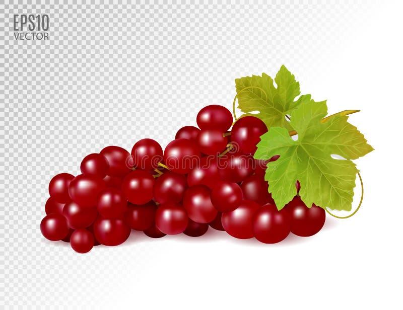 Δέσμη των κόκκινων σταφυλιών με τα φύλλα αμπέλων που απομονώνονται στο διαφανές υπόβαθρο Ρεαλιστικά, φρέσκα, φυσικά τρόφιμα, επιδ ελεύθερη απεικόνιση δικαιώματος