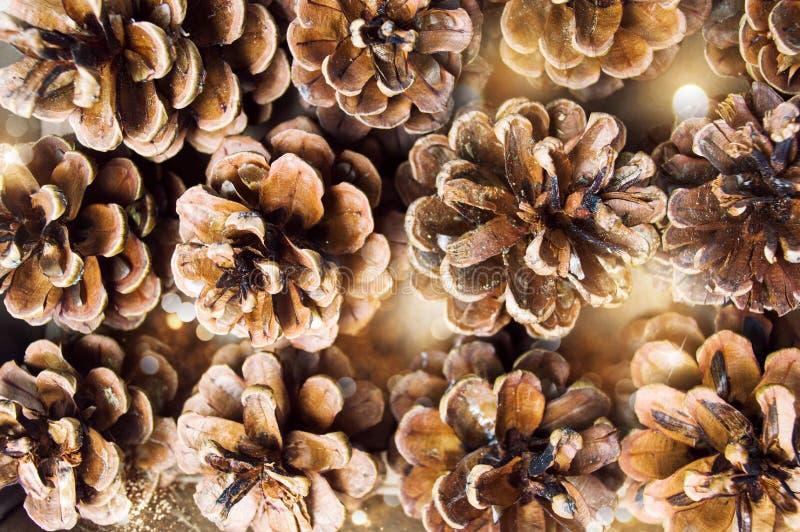 Δέσμη των κώνων πεύκων σε έναν σωρό στοκ εικόνα