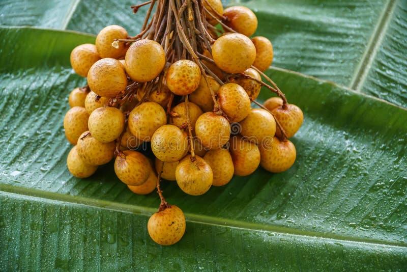Δέσμη των φρέσκων ακατέργαστων εξωτικών τροπικών ταϊλανδικών φρούτων Dimocarpus Longan στο φύλλο μπανανών στοκ φωτογραφίες