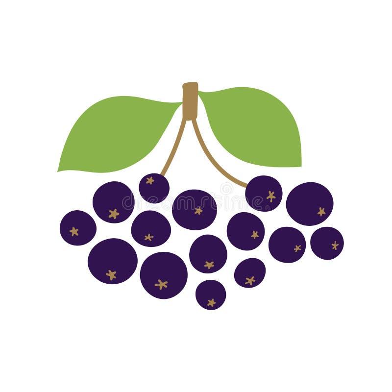 Δέσμη chokeberry με τα φύλλα Διανυσματικό μούρο r Συρμένα χέρι φρούτα Επιλογές Vegan Χορτοφαγία διανυσματική απεικόνιση