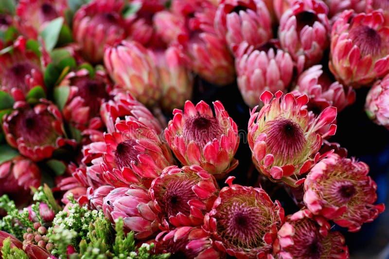 Δέσμη Protea στοκ εικόνα με δικαίωμα ελεύθερης χρήσης