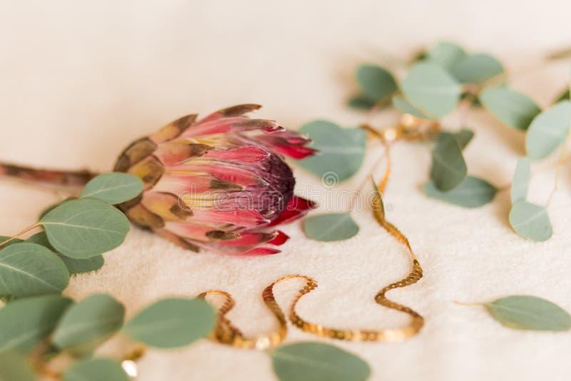 Δέσμη Protea Aristata στοκ εικόνες