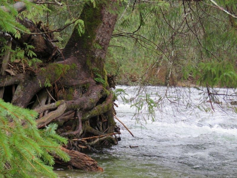 Δίδυμο ίχνος πτώσεων πολιτεία της Washington, κρατικό πάρκο Olallie στοκ φωτογραφία