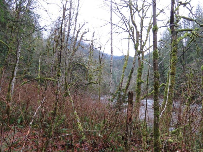 Δίδυμο ίχνος πτώσεων πολιτεία της Washington, κρατικό πάρκο Olallie στοκ εικόνα με δικαίωμα ελεύθερης χρήσης