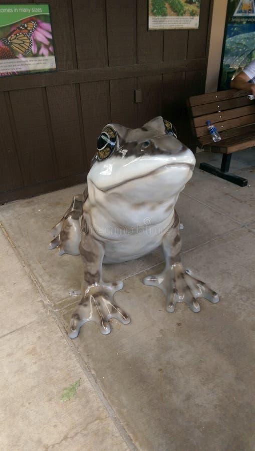 δίκαιος βάτραχος στοκ εικόνες