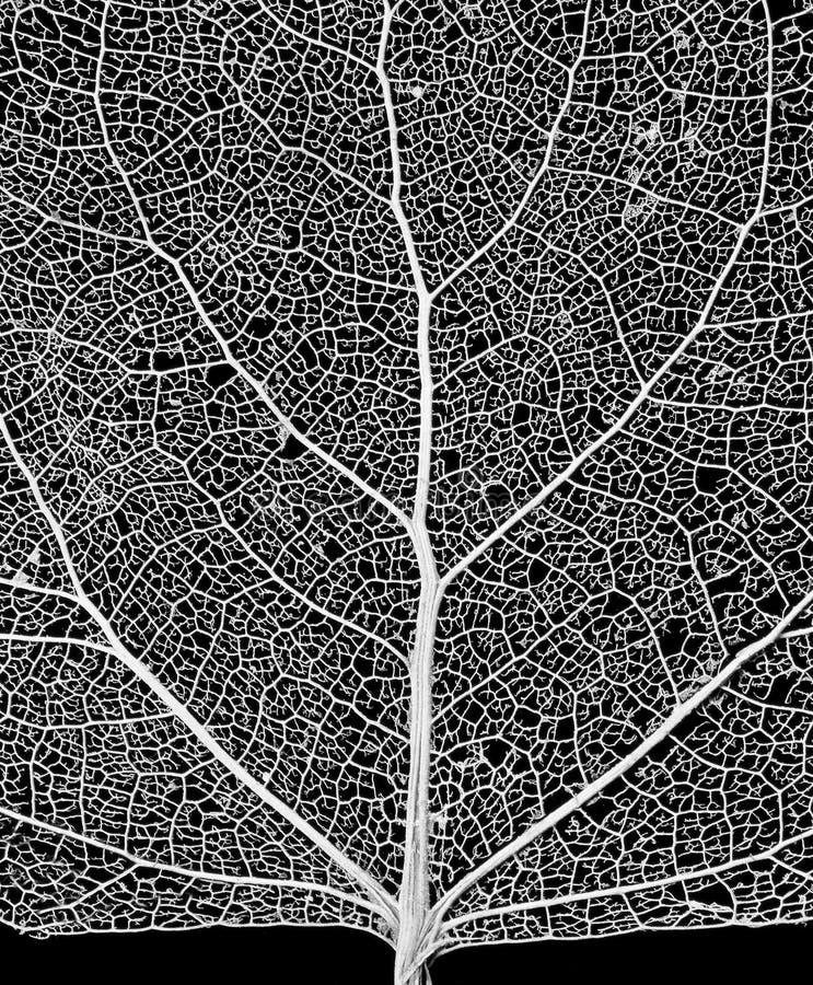 Download δίκτυο στοκ εικόνες. εικόνα από αγγειακός, σκελετοί, κυτταρίνη - 61068
