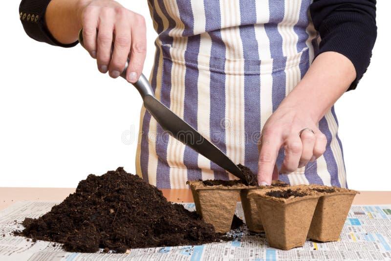 Δίνει το χώμα πλήρωσης στα δοχεία τύρφης στοκ εικόνες