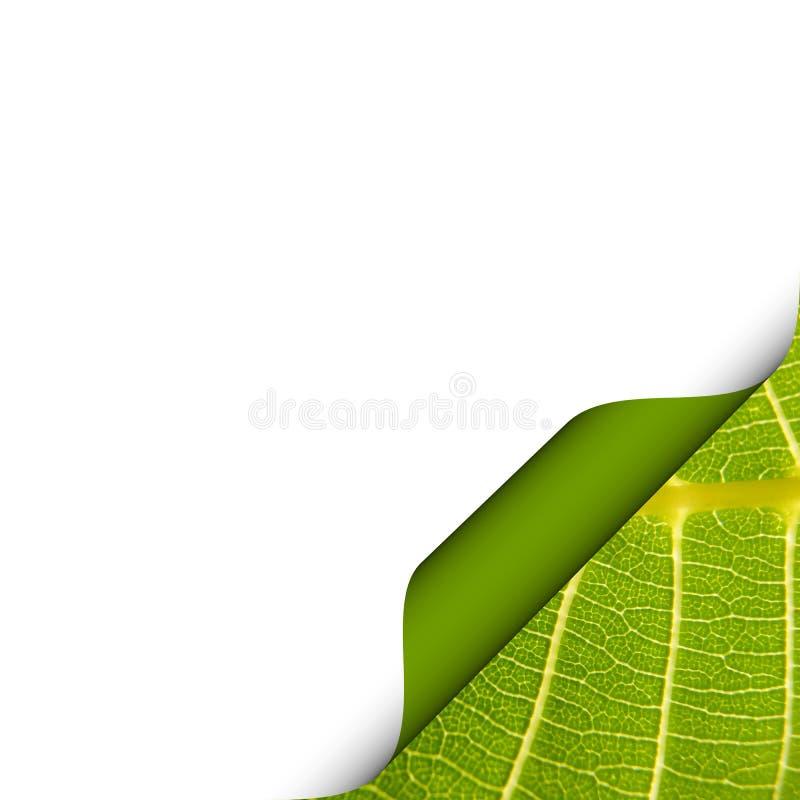 Δίπλωμα της σελίδας με το φύλλο διανυσματική απεικόνιση