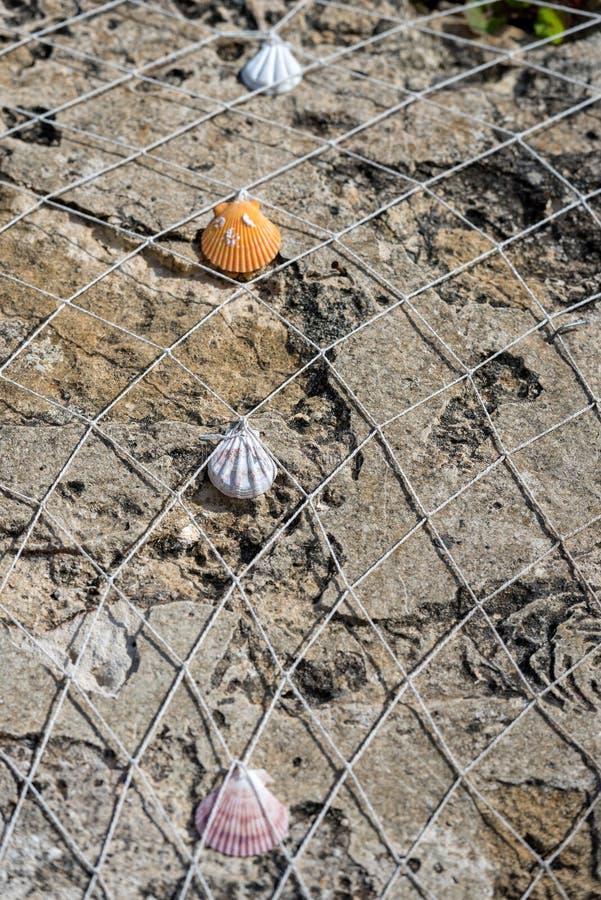 Δίχτυ του ψαρέματος με τα κοχύλια στο υπόβαθρο βράχου στοκ εικόνα με δικαίωμα ελεύθερης χρήσης