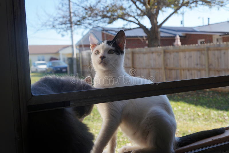Δίδυμο θερινών γατακιών στοκ φωτογραφίες με δικαίωμα ελεύθερης χρήσης