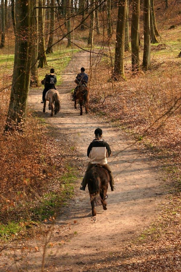 δανικά άλογα στοκ φωτογραφία