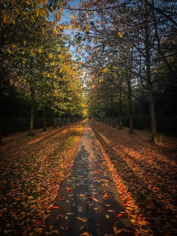 Δανικά πτώση/φθινόπωρο Όμορφος βγάζει φύλλα και χρωματίζει Νεκροταφείο Vestre Κοπεγχάγη στοκ εικόνες