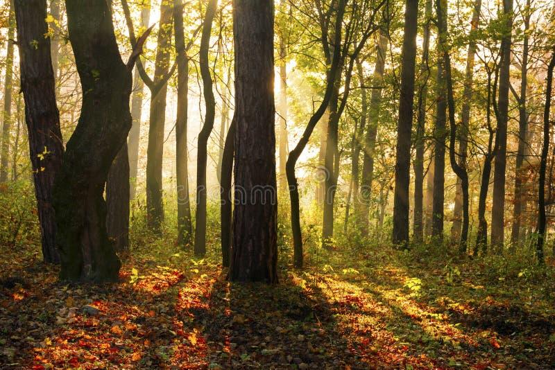 Δασικά δέντρα φθινοπώρου στοκ φωτογραφίες με δικαίωμα ελεύθερης χρήσης