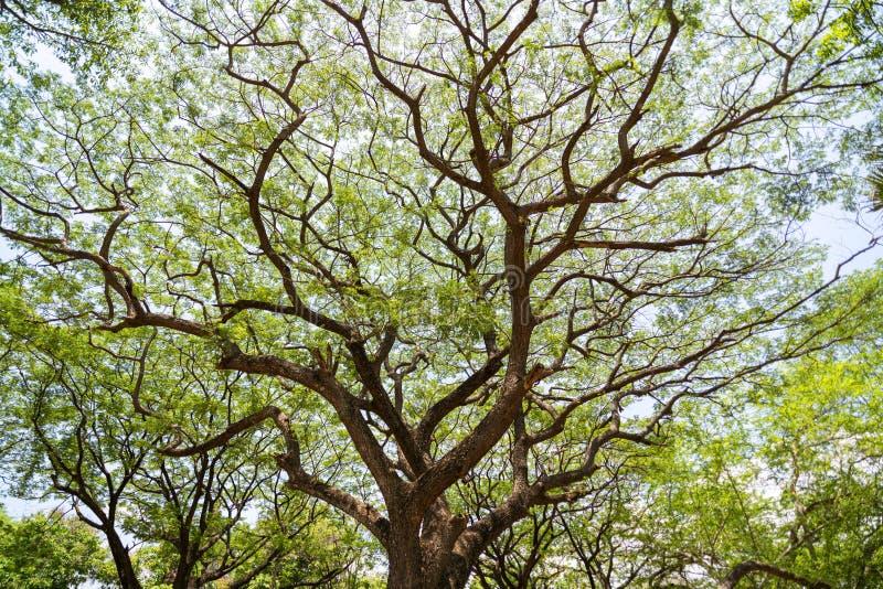 Δασικά δέντρα αύξησης, πράσινο τροπικό δάσος δέντρων φύσης για το υπόβαθρο και σχέδιο στοκ φωτογραφία με δικαίωμα ελεύθερης χρήσης