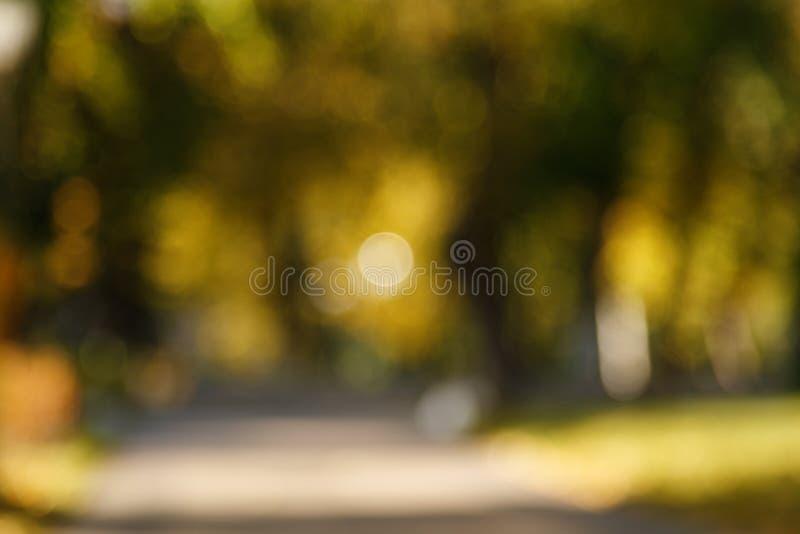 Θολωμένο περίληψη υπόβαθρο φύσης Δασικά δέντρα, ηλιόλουστη ημέρα, έντονο φως ήλιων, bokeh Σκηνικό Defocused για το σχέδιό σας στοκ εικόνα