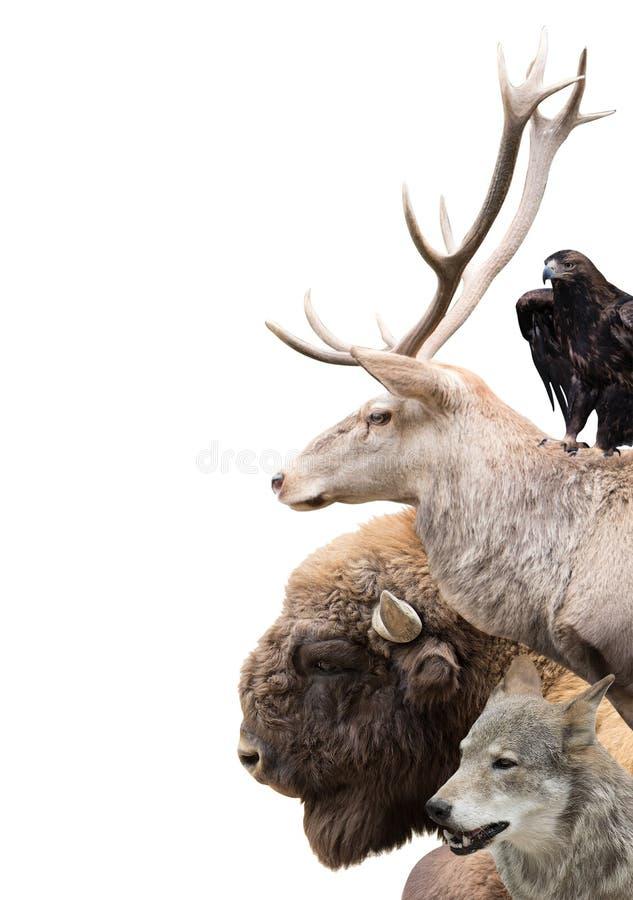 Δασικά ζώα στοκ εικόνες
