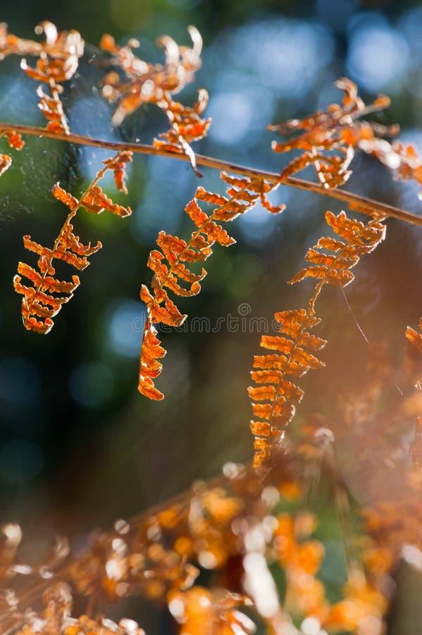 δασικά φύλλα φτερών στοκ εικόνες