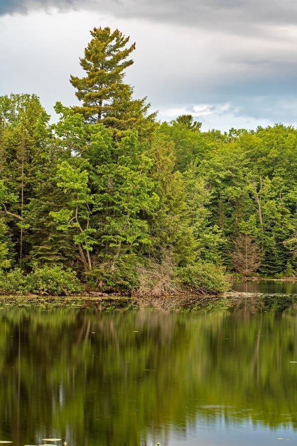 Δασικά χρώματα που απεικονίζονται στα ήρεμα νερά στοκ φωτογραφία με δικαίωμα ελεύθερης χρήσης