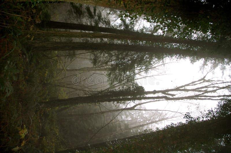 δασικά ψηλά δέντρα στοκ φωτογραφία με δικαίωμα ελεύθερης χρήσης