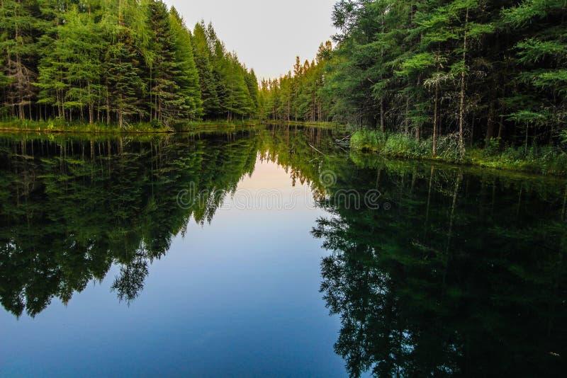 Δασικές αντανακλάσεις ποταμών αγριοτήτων στοκ εικόνες