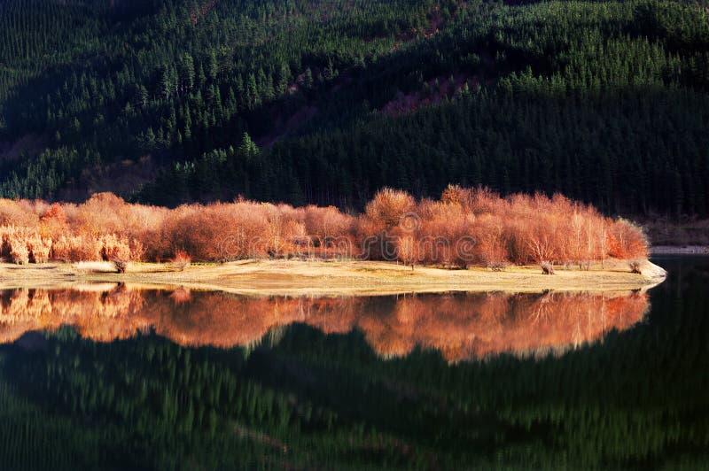 Δασικές αντανακλάσεις στη λίμνη στοκ εικόνα με δικαίωμα ελεύθερης χρήσης
