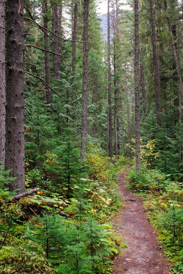 Δασικές απόψεις στοκ εικόνες