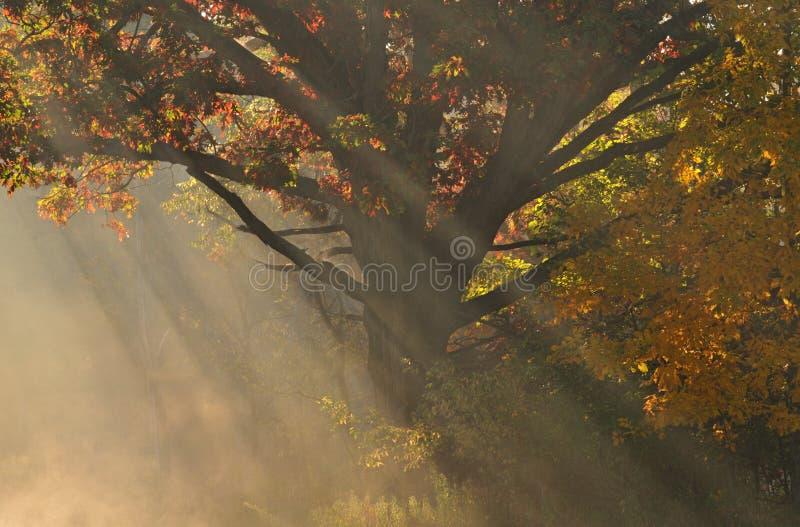 δασικές ηλιαχτίδες στοκ φωτογραφίες με δικαίωμα ελεύθερης χρήσης